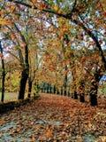 Проход полного цвета осенний стоковые фотографии rf