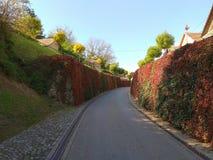 Проход цветка виноградины wilde Стоковое фото RF
