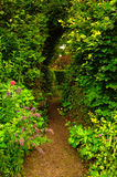 Проход сада Стоковые Фото
