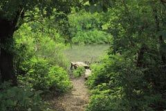 Проход через деревья к деревянной пристани Стоковое фото RF