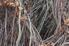 Проход через переплетенные ветви Стоковая Фотография