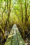 Тракт пущи мангровы. Стоковые Фотографии RF