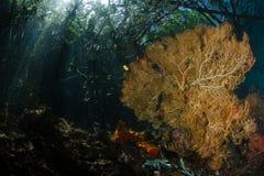 Проход, ampat раджи, Индонезия 04 Стоковая Фотография RF