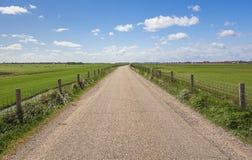 100 процентов голландский, пасущ коров около зацветая tuli Стоковое Изображение RF