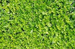 процесс завода фото предварительной предпосылки хороший зеленый Стоковые Фотографии RF