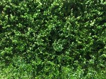процесс завода фото предварительной предпосылки хороший зеленый Стоковое Фото
