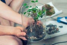 Процесс очищать бонзаи весной Руки человека держа бонзай в цилиндрическом стекле после очищать его от высушенный стоковое фото rf