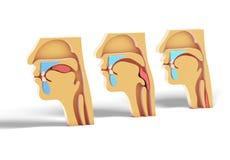 процесс показа иллюстрации 3D человеческий главный питаясь, оториноларингология ENT, гортань, ноздря, зубы, дыхание и носовые muc иллюстрация вектора