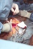 Процесс работы команды хирургов Стоковое фото RF