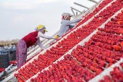 Процесс традиционного перца суша в Gaziantep, Турции стоковые изображения rf