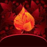 прочешите декоративные листья Стоковые Изображения RF