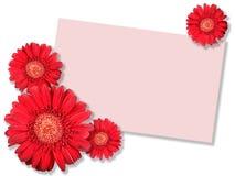 прочешите красный цвет сообщения одного цветка Стоковая Фотография