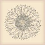 прочешите сбор винограда цветка Стоковые Фото