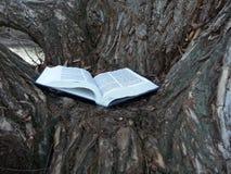 Прочитанный и мудрый Стоковое Изображение