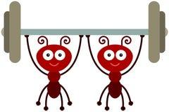 Прочность муравеев иллюстрация штока