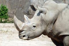 Прочность носорога стоковые изображения rf