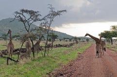 прочь гуляющ Стоковая Фотография RF