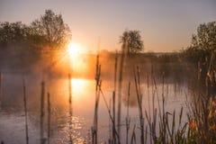 Прошивка восхода солнца светлая через туман и деревья и отражать внутри стоковое фото rf