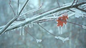 Прошлой осенью лист на ветви дерева в ледяном snow1 видеоматериал