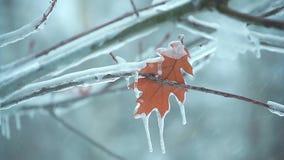 Прошлой осенью лист на ветви дерева в ледяном snow2 акции видеоматериалы