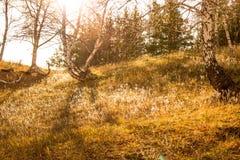 Прошлым летом луч Стоковое Фото