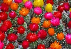 Продажа кактусов различных рангов в рынке цветка Стоковое Фото