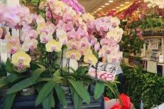Продажа орхидей в цветочном магазине Стоковая Фотография