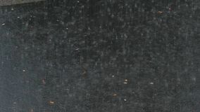 Проливной дождь на асфальте видеоматериал
