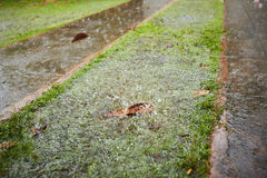 Проливной дождь стоковое фото rf