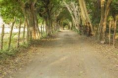 Проложите тоннель в конце дороги, острова Ometepe стоковое фото rf