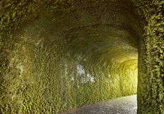 Проложите тоннель с заводами плюща на влажной стене Каменная тропа Стоковые Изображения RF