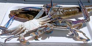 продукты моря кашевара готовые к Стоковая Фотография RF