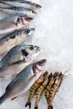 продукты моря льда Стоковая Фотография