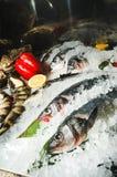 продукты моря черного льда изолированные Стоковые Изображения RF