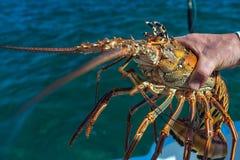 Продукт моря воды омаров Стоковые Изображения