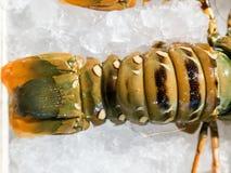 Продукт моря омара Стоковые Изображения
