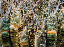 Продукт моря омара Стоковые Фотографии RF
