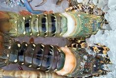 Продукт моря омара Стоковые Фото