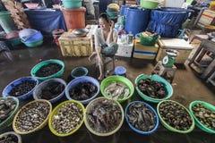 Продукт моря от южного китайского моря Стоковые Изображения RF
