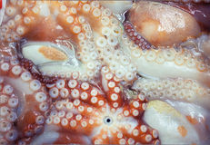 Продукт моря Стоковая Фотография RF