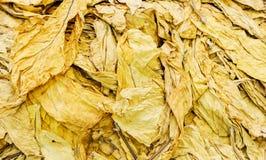Продукция табачной промышленности Стоковая Фотография