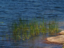 пруды края Стоковые Изображения RF