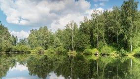 Пруд в лесе лета под облаками сток-видео