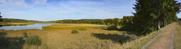 Пруд в лесе, чехия стоковые фото