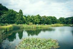Пруд в парке города Стоковая Фотография