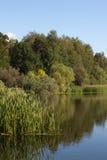 Пруд в парке Pokrovskoe-Streshnevo стоковое изображение rf