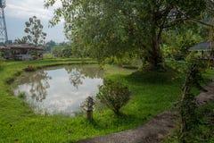 Пруд в саде с заводом, деревом и хатой в сельской местности Стоковая Фотография RF