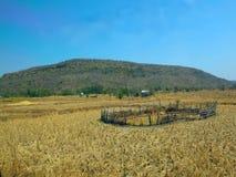Пруд в ферме риса стоковая фотография rf
