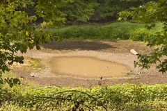 пруд засухи Стоковые Изображения