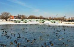 Пруд зимы в Tsaritsyno Стоковые Изображения